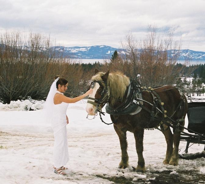 horse wedding me
