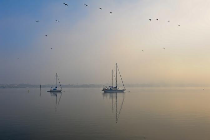 Foggy Bayfront