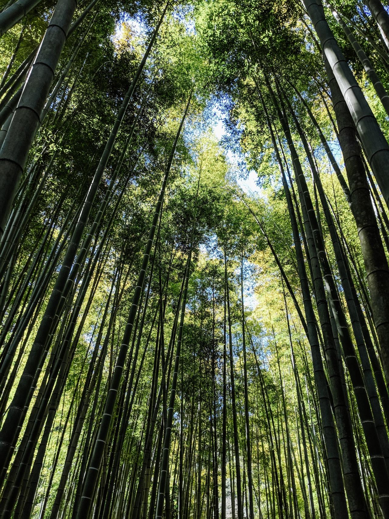 bamboo- IMG_20190313_113022-2
